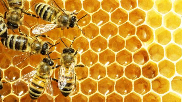 Squadra - api
